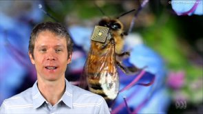 1_21 Open Data Broadcast (Value of Open GeoData, Bee Sensors, GPS/Silicon Valley and More)