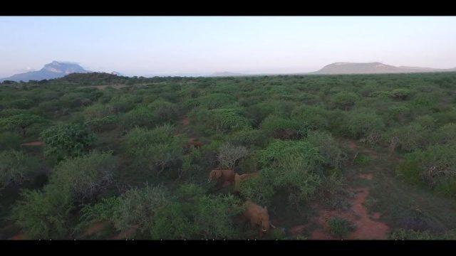 Wildlife Works Kasigau Corridor REDD+ Project, Kenya